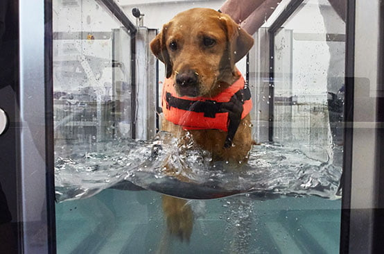 Dog in hydrotherapy treatment