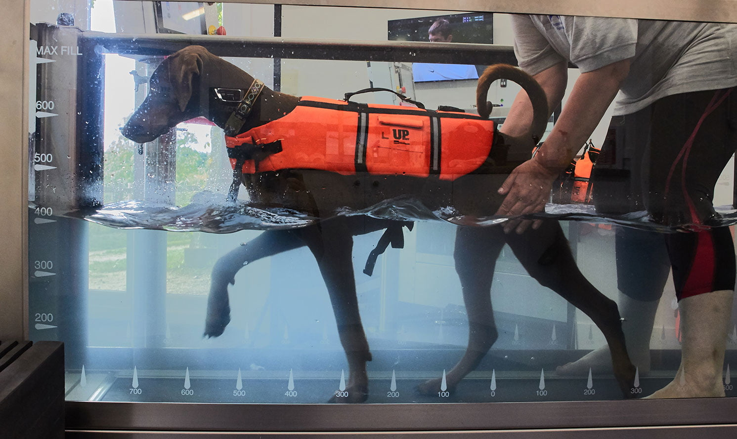 Hydrotherapy for dogs in Woking, Surrey