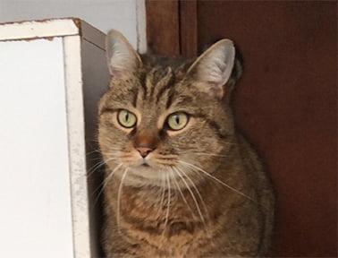 Friend of Oak Ride Kennels & Cattery